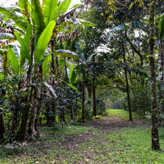 Walk the Trails in Finca Paradise Coffee Plantation
