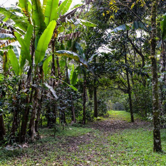 Walk the Trails in Finca Paradise Coffee Plantation